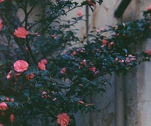 flowers, alternative, and grunge image