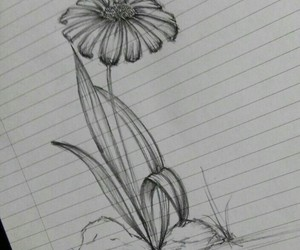 drawing, flowers, and nature image