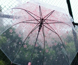 flowers, rain, and pink image