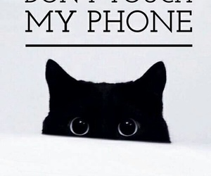cat, wallpaper, and phone image
