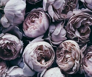 flowers, purple, and grey image
