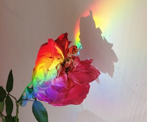 rainbow, flowers, and pastel image