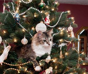 cat, christmas, and decor image