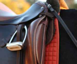 equestrian and saddle image
