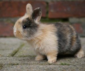 adorable, bunny, and animal image