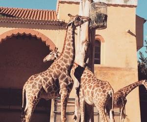 giraffes, lisbon, and zoo image