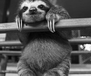 animal, cute, and sloth image