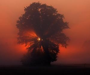 orange and sunset image
