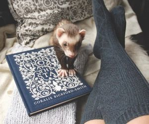 blue, book, and socks image