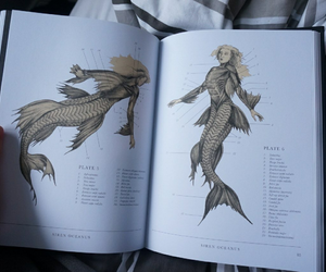 mermaid and book image