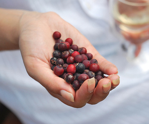 berries, berry, and wine image