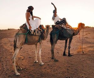 travel, camel, and summer image