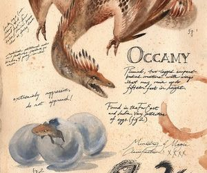 harry potter, newt scamander, and occamy image