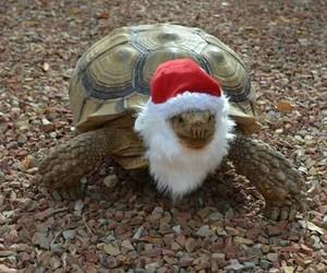 animal, christmas, and cool image
