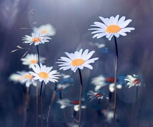 flowers, daisies, and spring image
