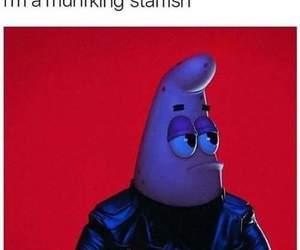 funny, meme, and starfish image