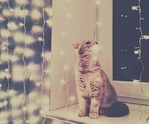 cat, light, and animal image