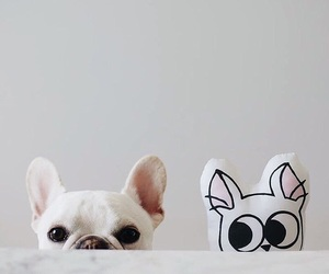 dog, french bulldog, and cute image