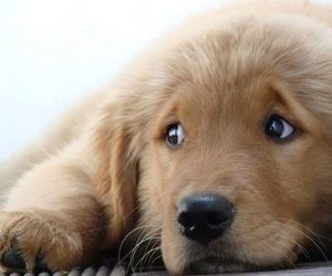 animals, puppy, and love image
