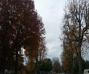 cloudy, greysky, and fall image