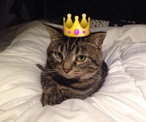 cat and snapchat image