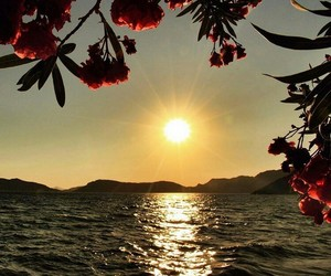 flowers, ocean, and nature image