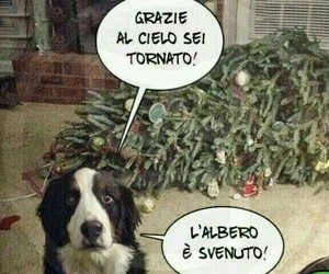 cane and natale image