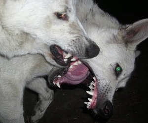 dangerous, dog, and dogs image