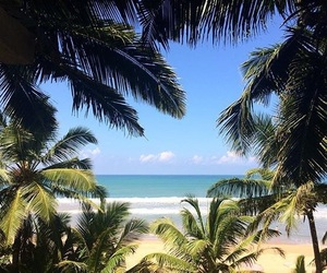 beach, palmiers, and soleil image