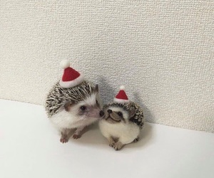 beautiful, hedgehog, and lovely image