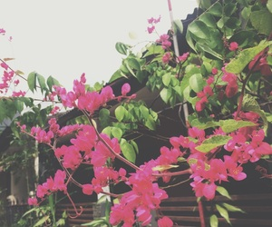 cloud, flowers, and jakarta image
