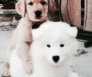 little dogs, cute, and beautiful creatures image