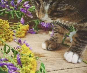 cat, cute, and flower image