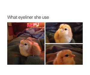 Chicken, funny, and cute image