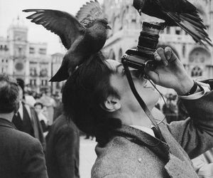 bird, photography, and black and white image
