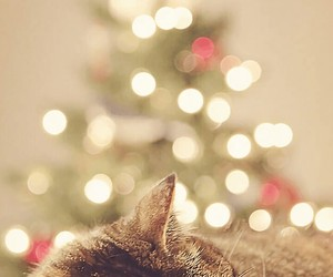 cat, ️chrismas, and new year image