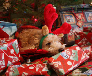 christmas, dog, and present image