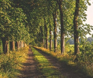 nature and trees image