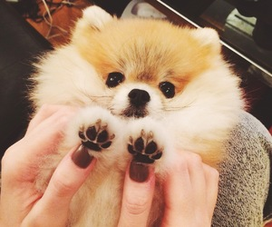 paws, dog, and cute image