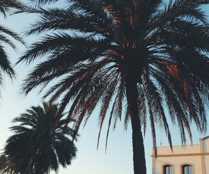 palm, summer, and Sunny image
