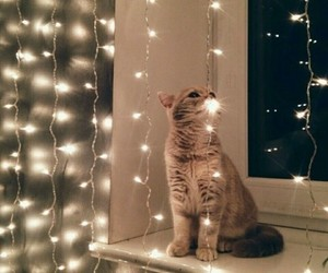 cat, holiday, and lights image