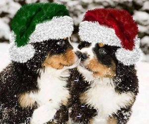 christmas and puppy image