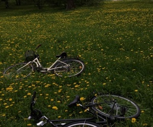 bike, flowers, and nature image
