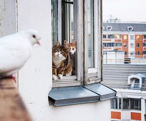 cat, funny, and window image