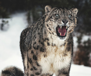 animal, cold, and feline image