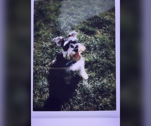 dog, moment, and perro image