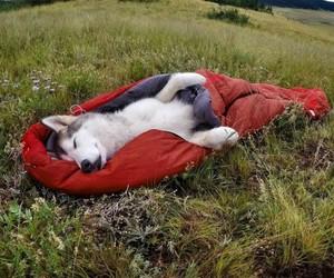 dog, sleep, and animal image