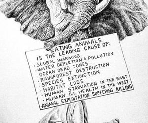 animal, vegan, and earth image