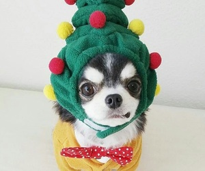 chihuahua, color pop, and christmas image