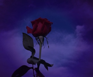 rose, sky, and wallpaper image